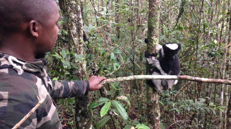 Madagascar, Africa, Afrique, lemur, selva